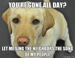 Black Lab Meme - meth lab dogs funny funny pics story