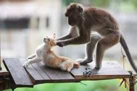 Cat Fight Meme - cat monkey funny fight image