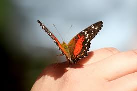 butterfly on hand free stock photo public domain pictures