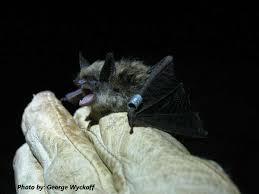 small bat the tennessee bat working