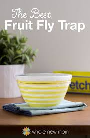 What Are The Small Flies In My Bathroom Best 25 Best Fly Trap Ideas Only On Pinterest Best Mosquito