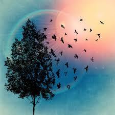 tree birds bird free image on pixabay