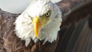 Seeking Season 4 Reddit Nd Department Seeking Help In Locating Bald Eagle Nests West
