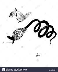 illustration from the book rikki tikki tavi by rudyard kipling