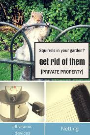 5 humane ways to get rid of squirrels in your garden squirrel