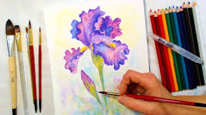 iris watercolor pencil drawing and painting tutorial december