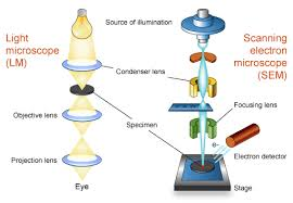 name one advantage of light microscopes over electron microscopes background information what is scanning electron microscopy myscope