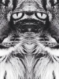 micmeck cat art black and white eyes photography tiger lion light