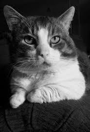 195 best just viral cats images on pinterest golden retrievers