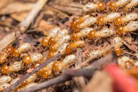 Winged Termites In Bathroom Valuable Tips On Recognizing And Dealing With Termites Romex