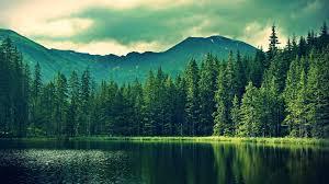 wallpaper tumblr forest forest 818013 walldevil
