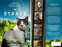 strays lost cat homeless man journey america