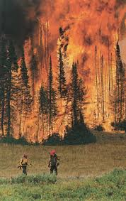 72 best wildland firefighting images on pinterest firefighting