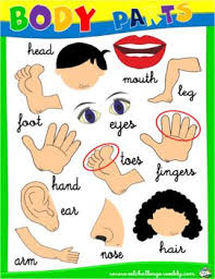 28 best body parts images on pinterest body parts printable