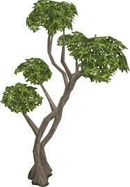 Fruit Trees Runescape - eucalyptus tree runescape wiki fandom powered by wikia