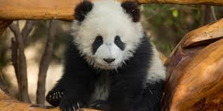 bbc earth ten of the cutest animal babies