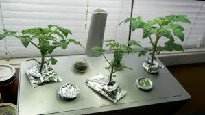 indoor winter garden update 2 5 2012 tomorrow u0027s garden