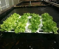 floating veggie raft for fish ponds 11 steps