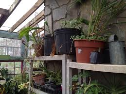 greenhouse steps2permaculture