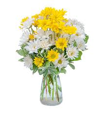 burlington florist dazed daisies delivery in burlington ontario