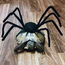 that u0027s the spirit joliet area critters don halloween costumes
