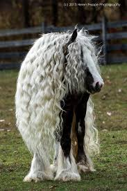 hairstyles for horses horses with beautiful hair beautiful horses horse hair styles