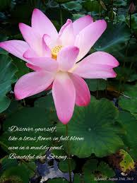 meaning of lotus flower memories pinterest lotus flower and