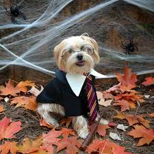 dog costume wizard of oz halloween dog costumes inspiration from instagram