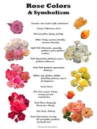 roses colors color meanings and symbolisms witches secret garden