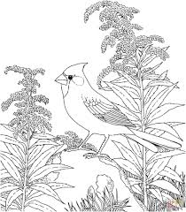 state birds coloring pages within bird coloring pages free eson me