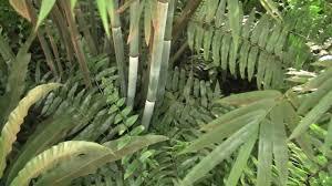 tropical backyard 1 bananas mangos u0026 bamboo etc youtube