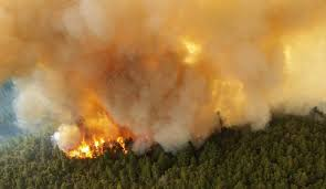 Wildfire Scientific Definition by Seven Case Studies In Carbon And Climate Nasa