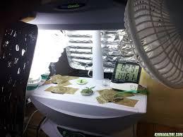 Aerogarden by Oatbakes U0027 Aerogarden White Dwarf Lowryder First Time Indoor Grow