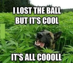 Cool Dog Meme - drug dog meme