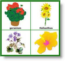 Life Of A Flower - plants preschool activities plants preschool lesson plans child