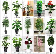 indoor types of evergreen ornamental plants artificial plants