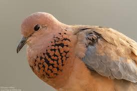 tips for backyard bird photography