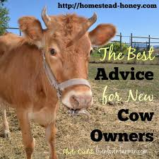 Backyard Dairy Cow What Every Cow Owner Should Know