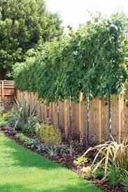 Fence Line Landscaping by Back Yard Trees Along Fence U2026 Pinteres U2026