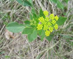 mn native plants preserved parcels offer glimpse of minnesota gone by minnesota