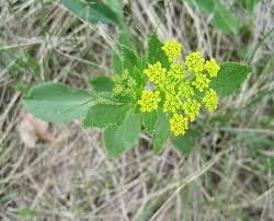 native prairie plants preserved parcels offer glimpse of minnesota gone by minnesota