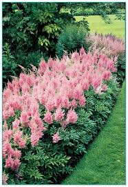 Climbing Plants That Flower All Year - best climbing flowering plants