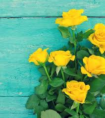 10 most beautiful yellow roses