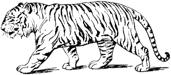 tiger walk with quiet coloring pages for kids ggk printable