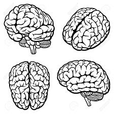 brain anatomy coloring book human brain set of four views vector illustration royalty free