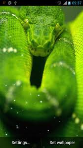 a green snake wallpapers snake live wallpaper android apps on google play