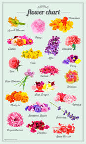 flowers edible sugar and charm s edible flower chart sugar and charm sweet