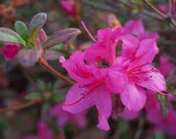 November Flowers Flowers In Late November Ramblin U0027 Through Dave U0027s Garden