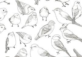 bird print wallpapers wallpaperpulse