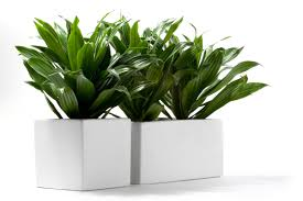 classroom plants the best and the worst plants to keep at